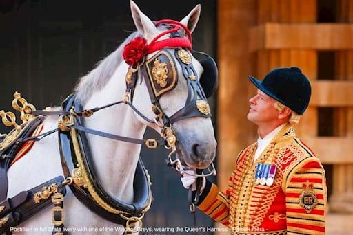 Royal Mews Horse
