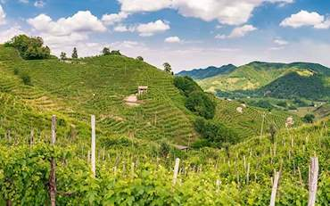 Valdobbiadene vineyards outside of Venice, Italy