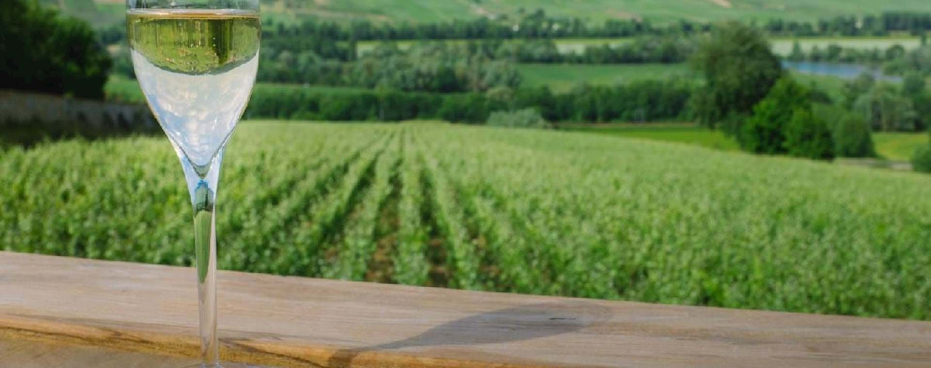 Glass of champagne overlooking a vineyard
