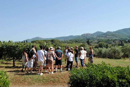 Guided tour of a Vineyard in Frascati
