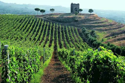 Vineyard in the Roman Countryside