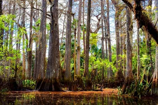 Trees in the Everglades, South Florida