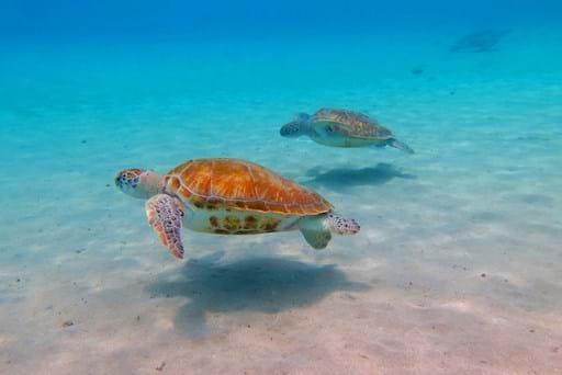 Turtles in Key West