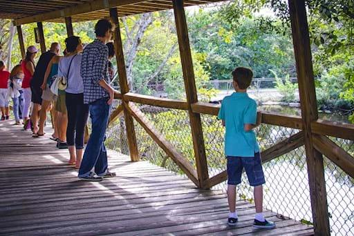 people watching alligators in Everglades