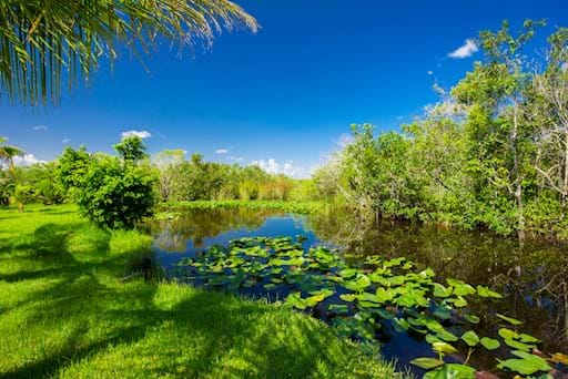 Beautiful view of the Everglades